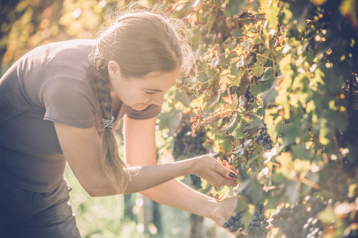 Les vignerons | Agence Class Vins Conseils | Bar Éphémère | Gladys et Maturin - 27